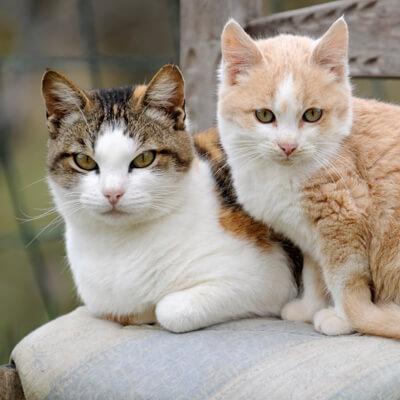 Why Cats Hide Pain | Okaw Veterinary Clinic