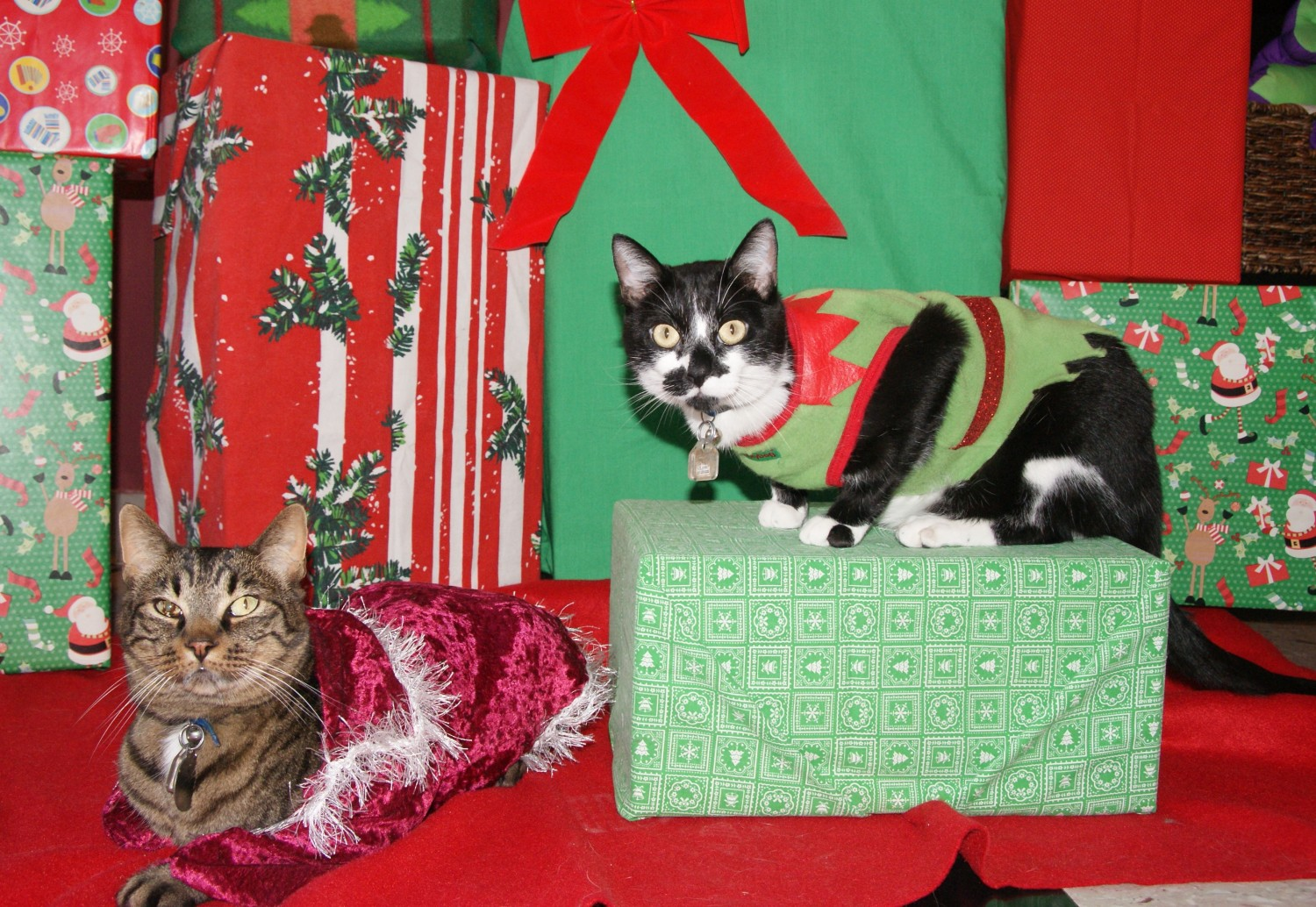 Ranger and Binx wish you a Happy Holiday