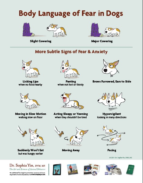 Dr. Yin's body language of dogs